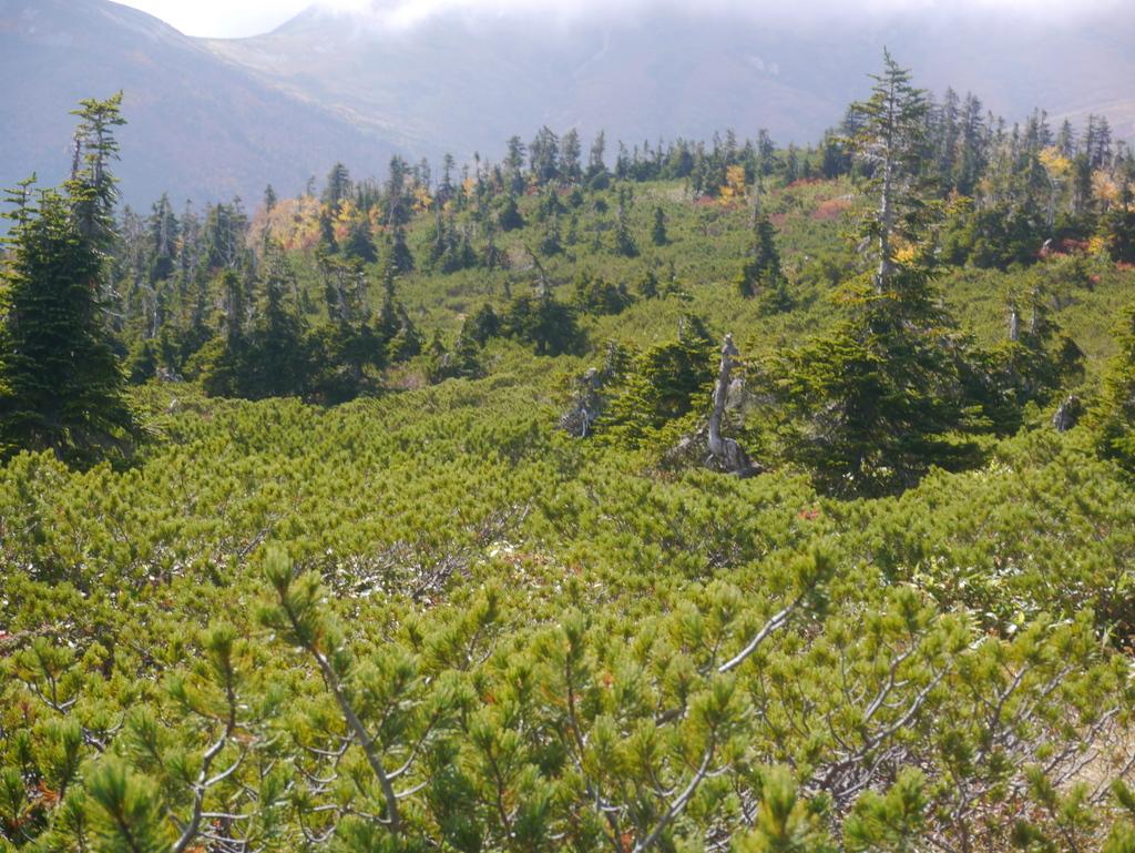 アラスカ庭園 (2)