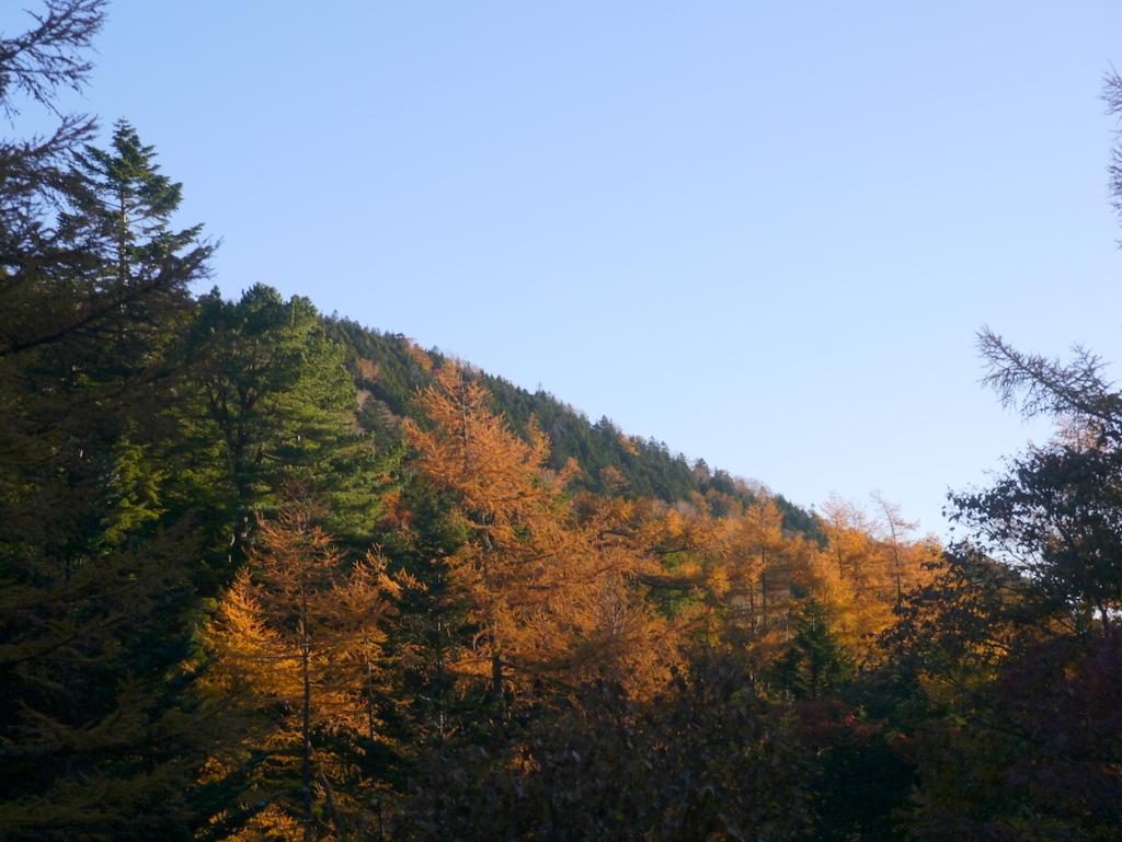 1-2015年10月本沢温泉樹林