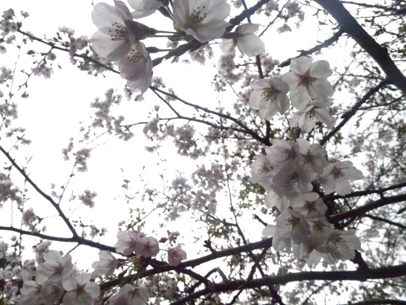 1-2016年4月竜爪山-009