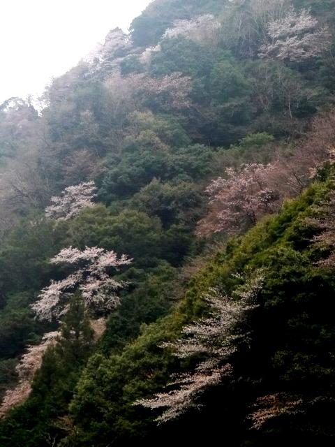1-2016年4月竜爪山